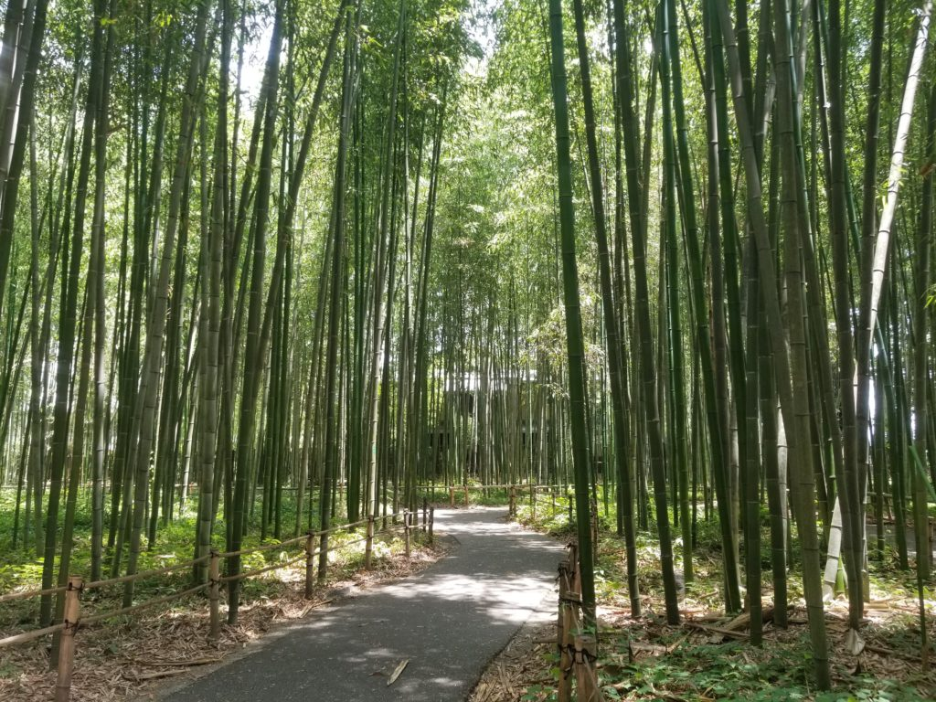 Bamboo Forest Guide