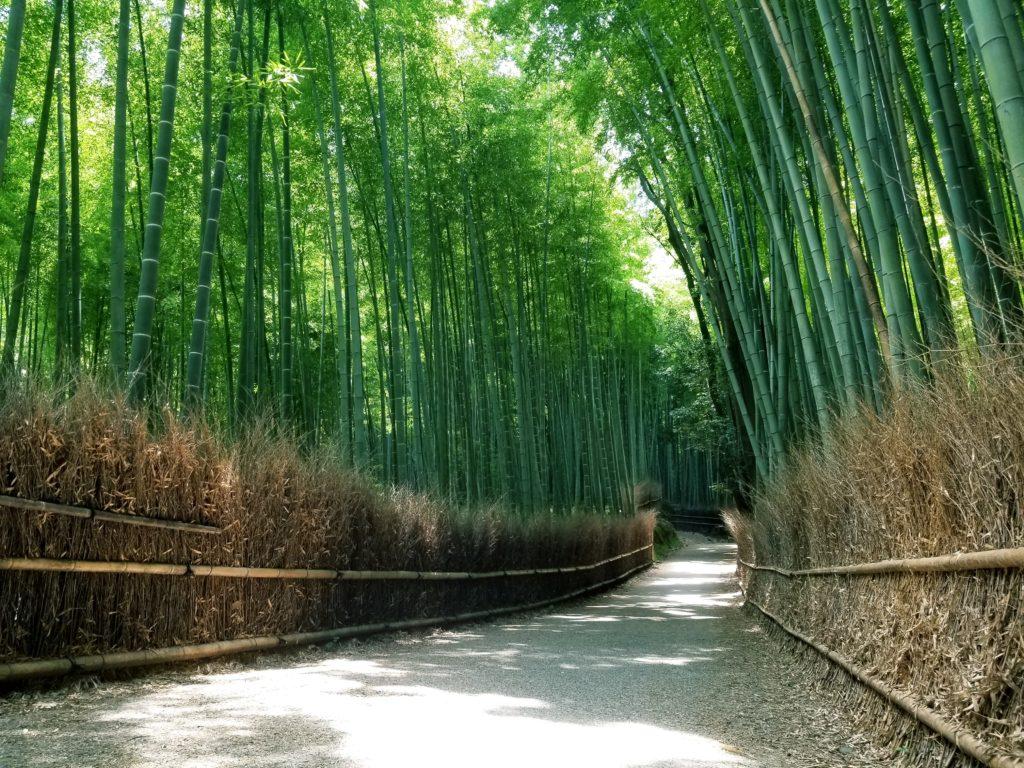 เที่ยวป่าไผ่เกียวโตด้วยตัวเอง (Arashiyama)