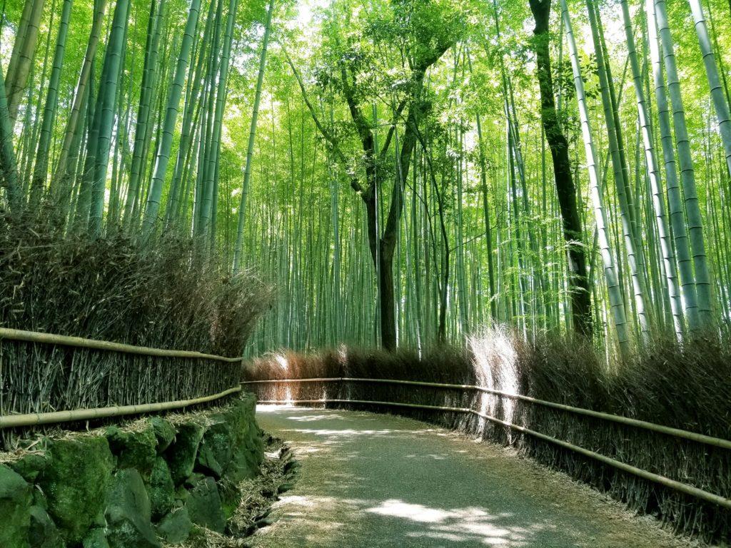 เที่ยวป่าไผ่เกียวโตด้วยตัวเอง