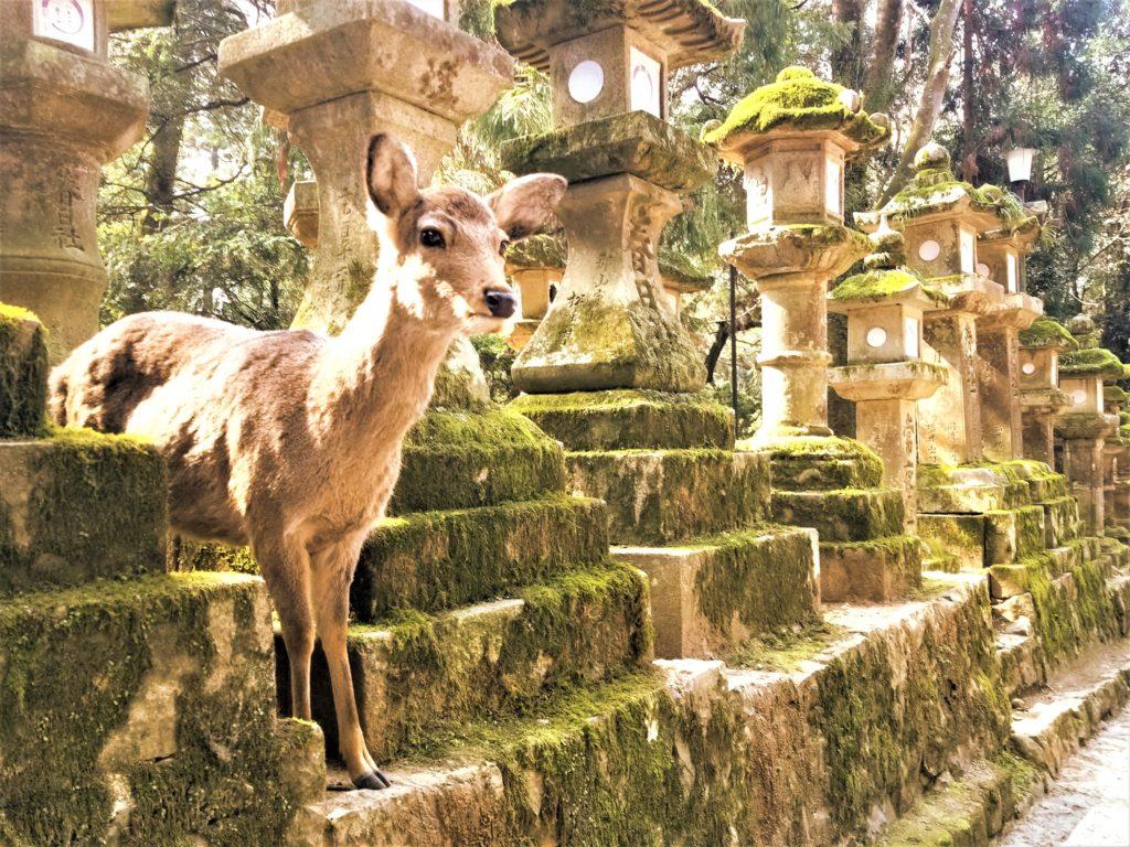 เที่ยวนาราด้วยตัวเอง (Nara Park)