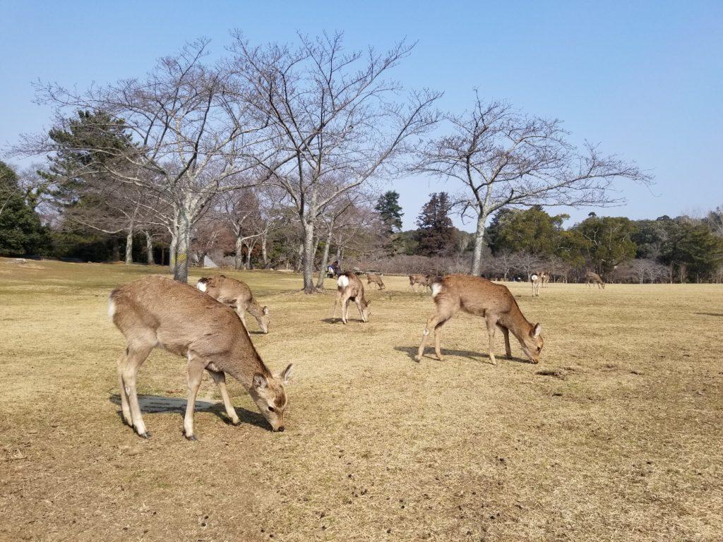 Nara Park Guide