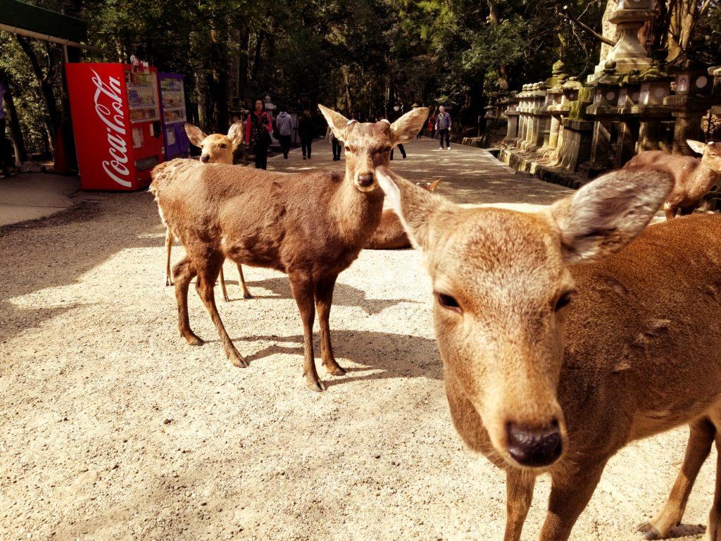 Nara Guide