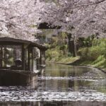 The Best Secret Cherry Blossom Spots in Kyoto
