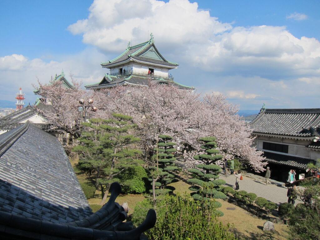 Cherry Blossom in Wakayama