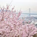 Cherry Blossom in Kobe