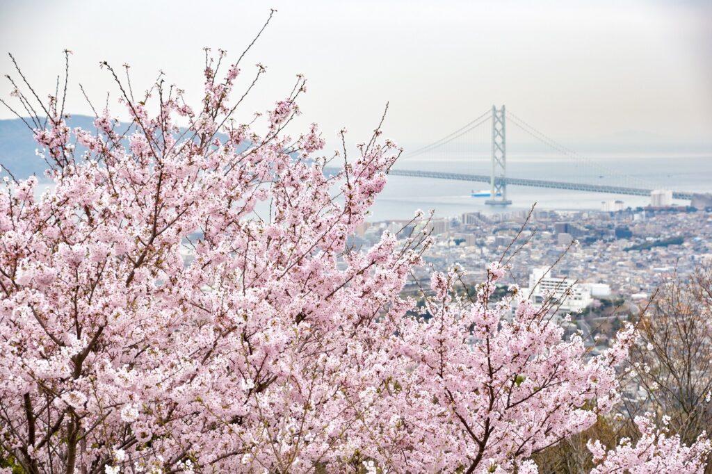 สัมผัสฤดูใบไม้ผลิและดูซากุระที่โกเบ (Kobe)