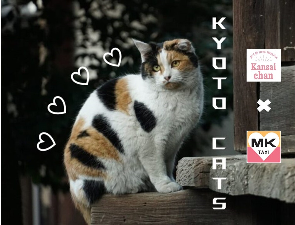 Japanese Cats: Kyoto Photo Collection