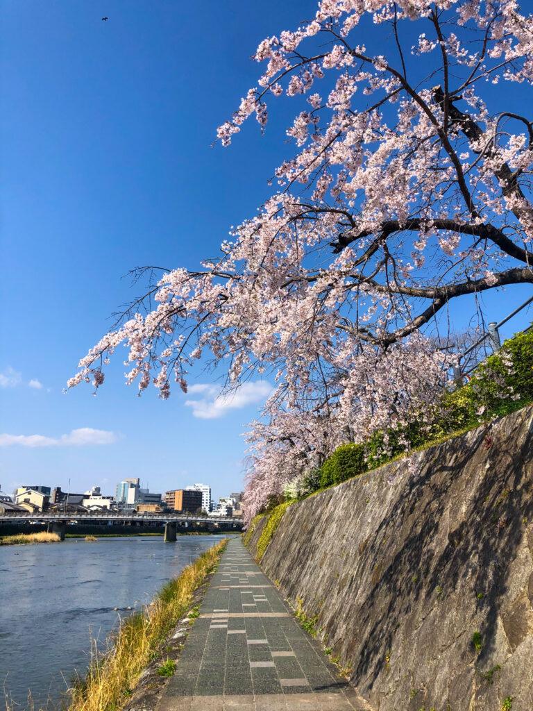 Kamogawa Spring