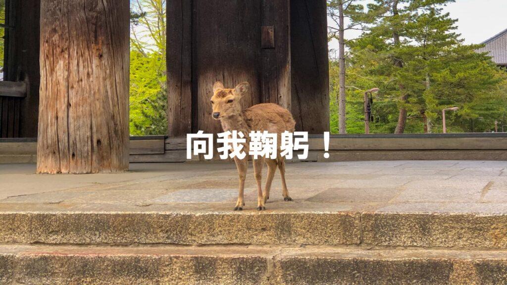 奈良的小鹿非常有禮貌! 會過馬路和鞠躬?! (有影片)